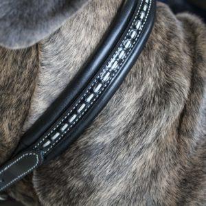 collier penelope chien